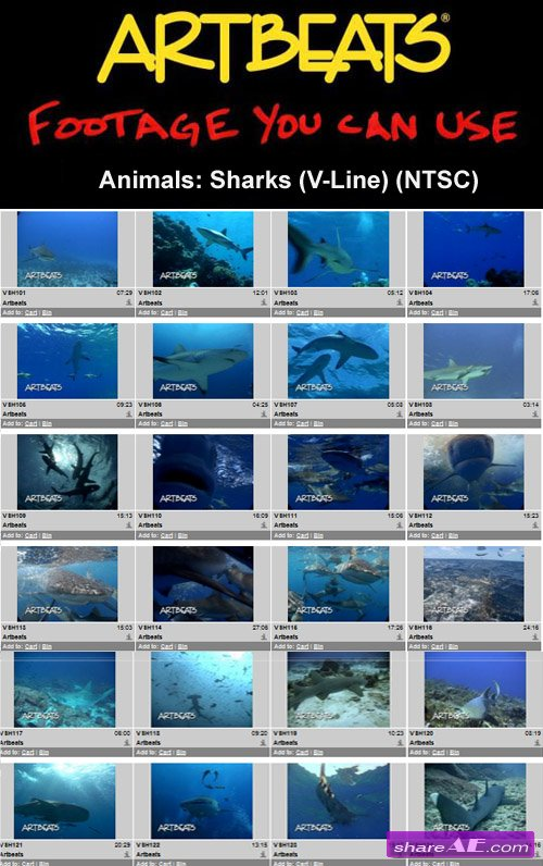 Artbeats - Animals: Sharks (V-Line) (NTSC)