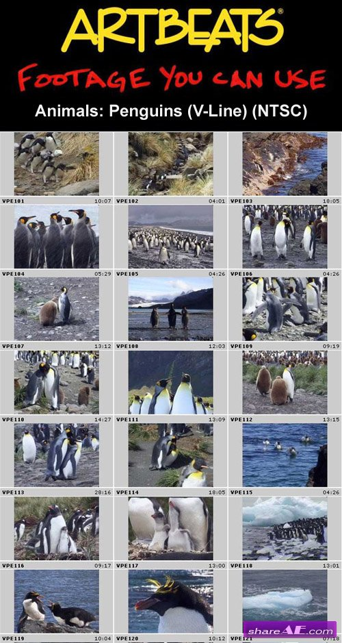 Artbeats - Animals: Penguins (V-Line) (NTSC)
