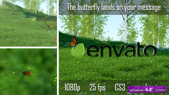 Butterfly Logo Reveal 6735223 - After Effects Project (Videohive)