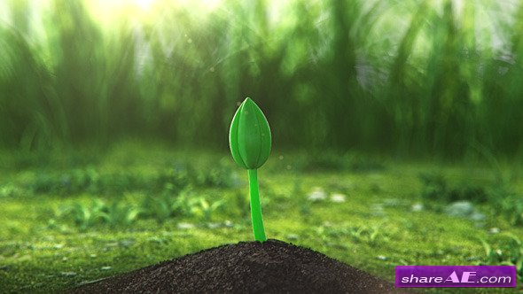 Growing Flower - After Effects Project (Videohive)