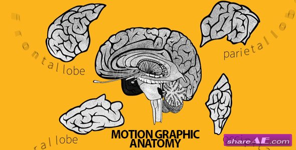 Videohive Brain Basic Anatomy - After Effects Project