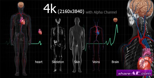 Medical Human - Motion Graphics (Videohive)