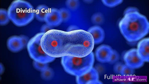 Dividing Cell - Motion Graphic (Videohive)