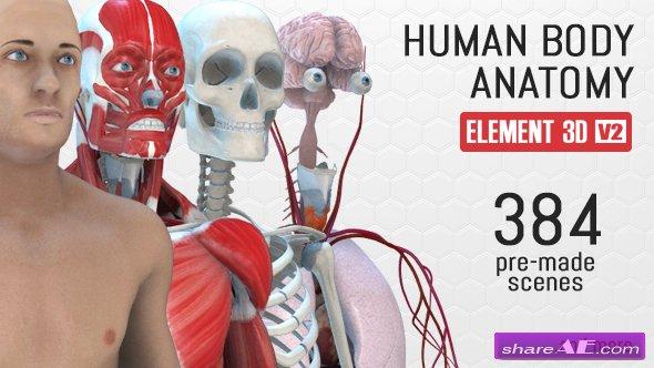 Videohive Human Body Anatomy