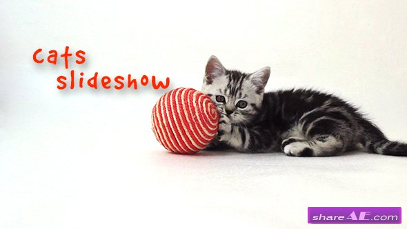 Videohive Cats Slideshow