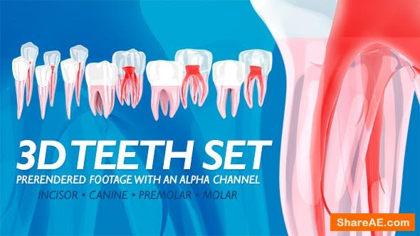 Videohive 3D Teeth Set