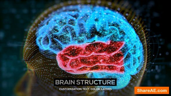 Videohive Brain Structure (4-pack)