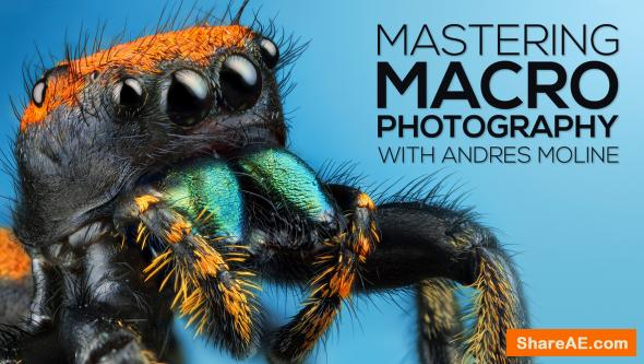 Mastering Macro Photography - The Complete Shooting and Editing - Fstoppers